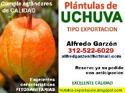 Semillas uchuva semillero pl ntulas plantas vivero bogota for Viveros frutales bogota