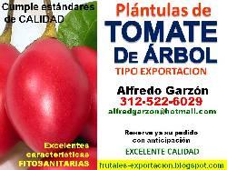 Semillas tomate de arbol semillero pl ntulas plantas for Viveros frutales bogota
